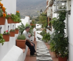 Se han adquirido plantas para colocarlas en las fachadas y embellecer el entorno.